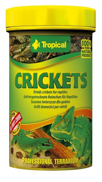 Tropical Crickets (getrocknete Heimchen)